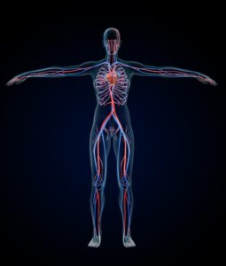 ワイズ整体院の血液循環の説明画像