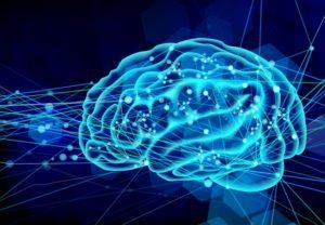 ワイズ整体院の脳の機能の解説風景